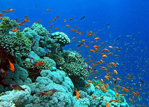 Hệ sinh thái san hô Hạ Long